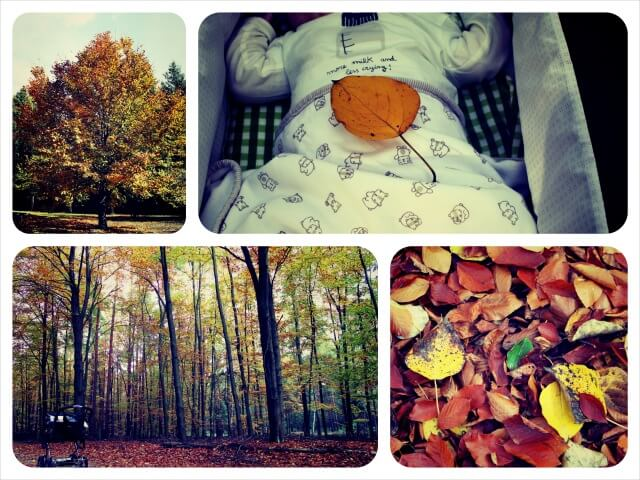 Herbst_2.0_Collage_1