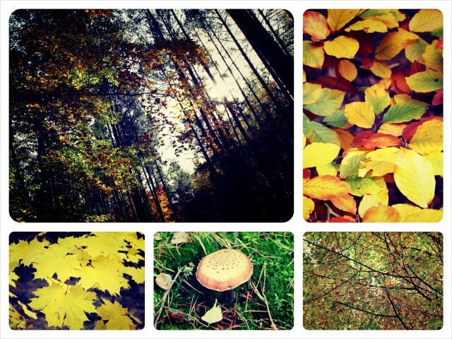 Herbst_2.0_Collage_2