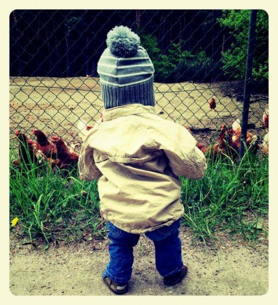 Ein_Bild_sagt_mehr_Hühner