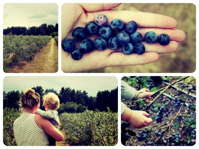 Blaubeeren_1_Collage