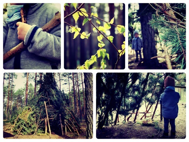 Wald_Collage
