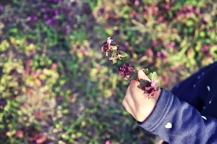 Ein-Bild-sagt-mehr-Blumen